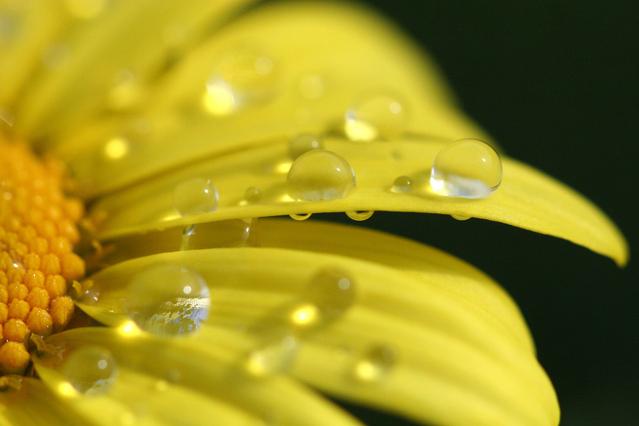 Każdy krem na trądzik musi zawierać naturalne ekstrakty - najlepiej kwiatowe.